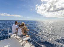 Whale Watching: Wale und Delfine auf Teneriffa