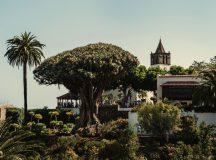 Must Sees auf Teneriffa – Orte, die ihr unbedingt gesehen haben müsst
